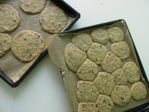 Chocolatechip cookies4