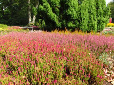 Duitsland Bremen Rhododendron park1