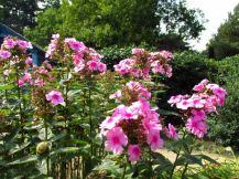 Duitsland Bremen Rhododendron park14