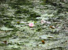 Duitsland Bremen Rhododendron park5