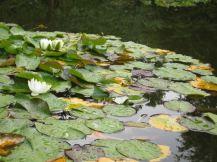 Duitsland Hamburg Botanische tuin