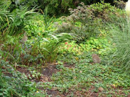 Duitsland Hamburg Botanische tuin5
