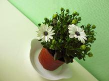 Groene planten (8)