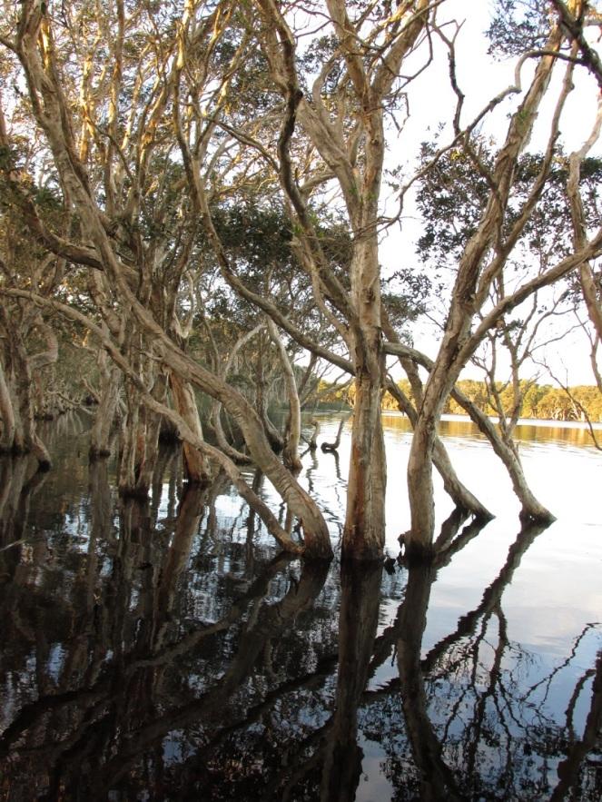 Byron Bay Scenic (36)