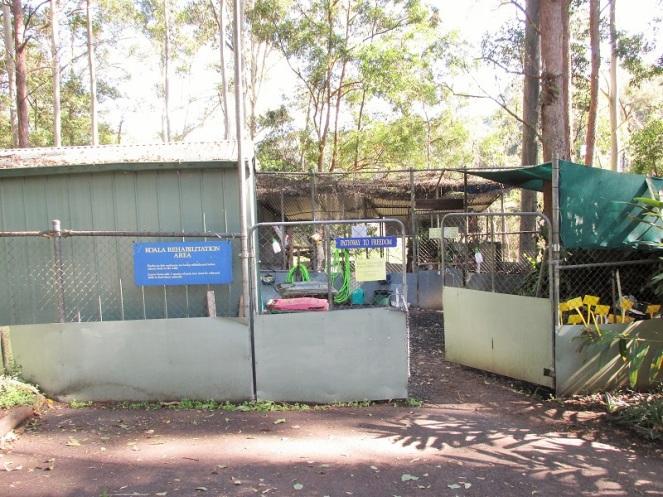 Koala reservate (1)