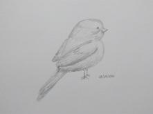 Doodle Bird