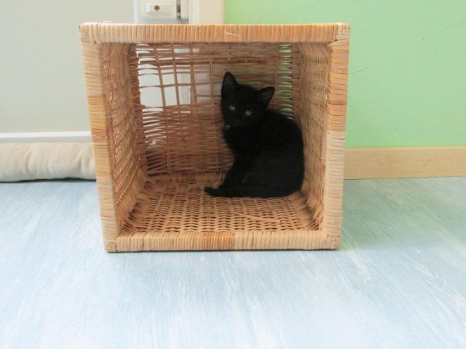 Kittens (2)